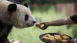 panda mooncake midautumn festival